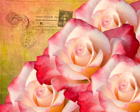 Winning Photographs at the 2014 ABQ Rose Show
